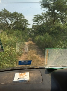 Driving into the Ugandan bush during my safari. During a safari, you spend hours in the car, going from one animal sighting spot to another. I had a wonderful guide, so the time on the road -- and our many conversations -- became part of the whole experience.