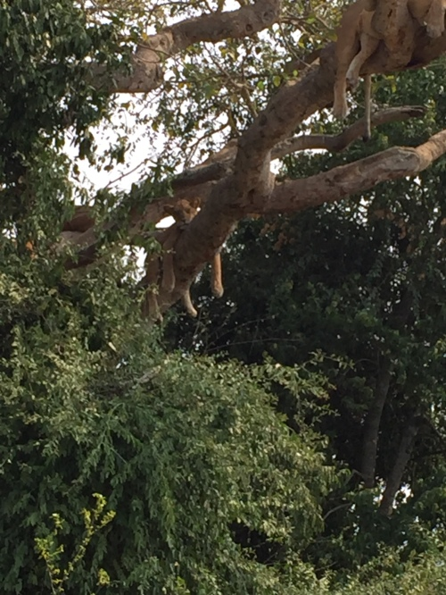 From this vantage point you can see the lion's dangling paws -- and imagine its claws.
