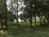 Lush Ugandan forest