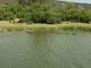 Submerged hippos