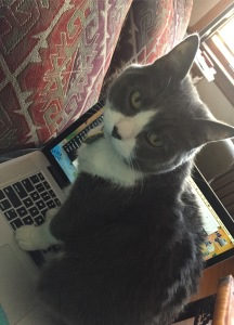 Regina likes to keep me company when I'm writing.
